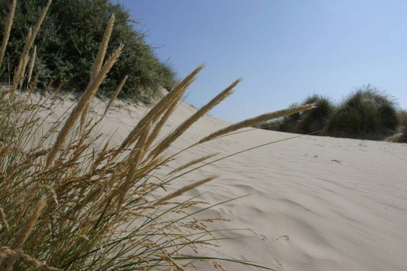 Dune DEWULF