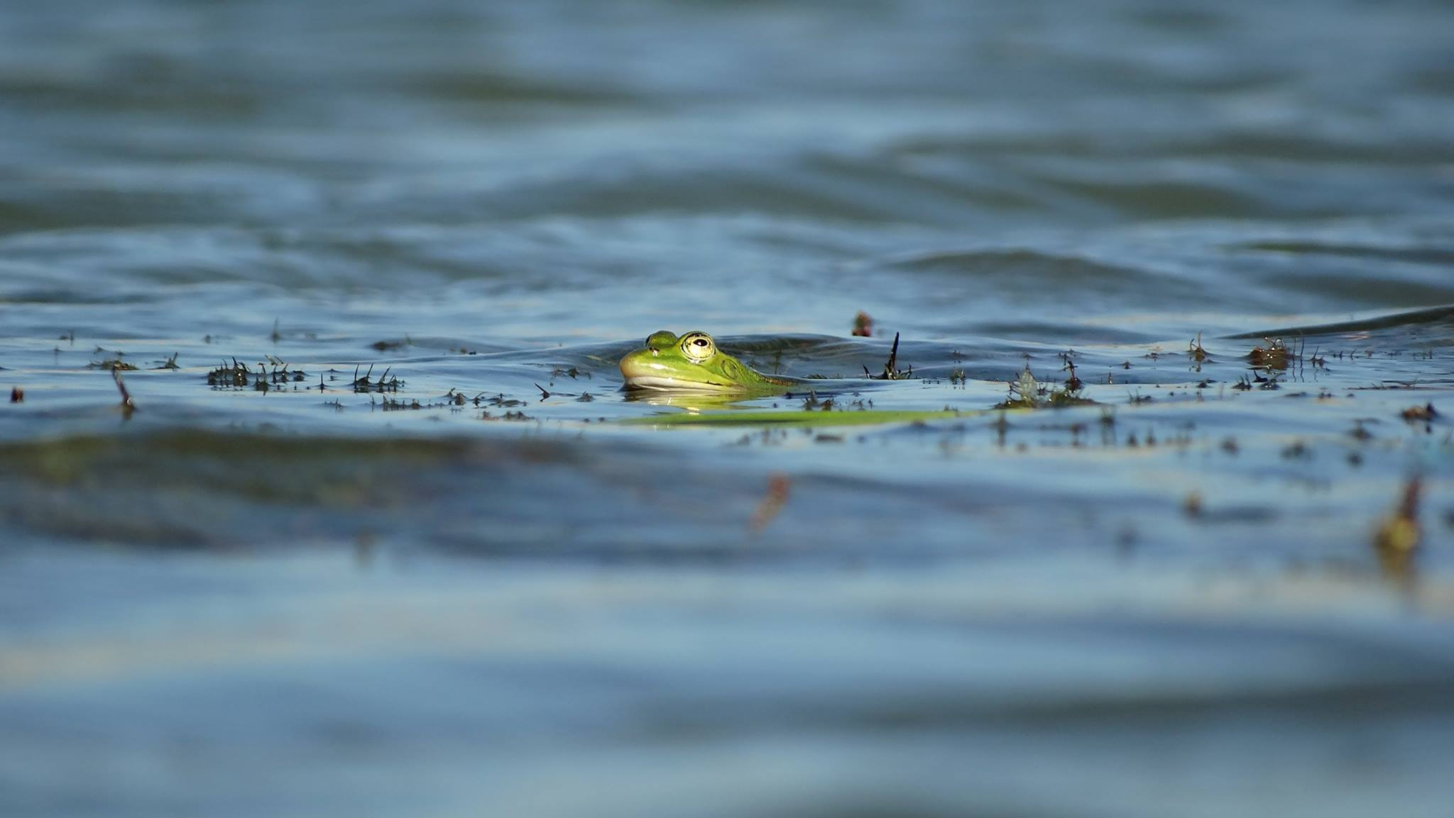 programe-activite-classe-nature-grenouille